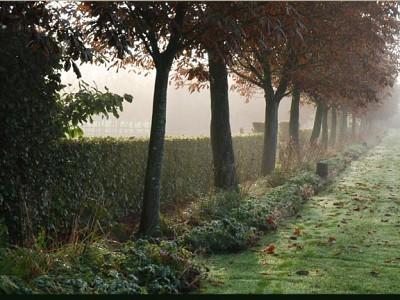 Les Jardins de Mézicourt